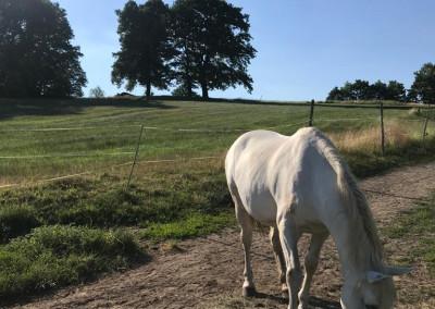 Pferde im Seminarort der Wildnisschule