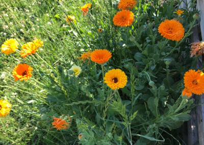 Blumen auf dem 'Gute Laune Hof'