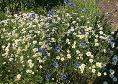 Blumenmeer auf dem 'Gute Laune Hof'