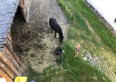 Tiere auf dem 'Gute Laune Hof'
